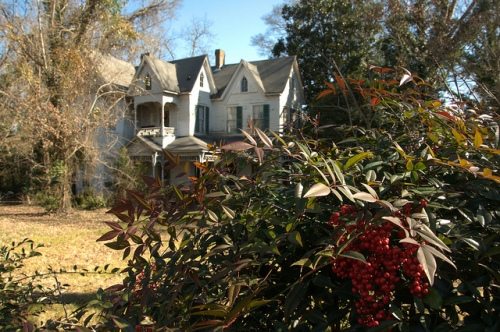 Monticello GA Kelly House Nandina Bamboo Bushes Berries Photograph Copyright Brian Brown Vanishing North Georgia USA 2015