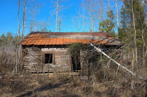 Abandoned Tenant House Shoulderbone Community GA Hancock County Fallen Tree Photograph Copyright Brian Brown Vanishing North Georgia USA 2015