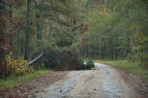 Scull Shoals Trail Greene County GA Fallen Pine Tree Photograph Copyright Brian Brown Vanishing North Georgia USA 2015