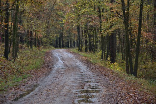 Scull Shoals Trail Road Greene County GA Photograph Copyright Brian Brown Vanishing North Georgia USA 2015