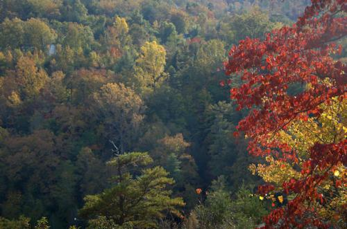 tallulah-gorge-ga-fall-color-photograph-copyright-brian-brown-vanishing-north-georgia-usa-2016